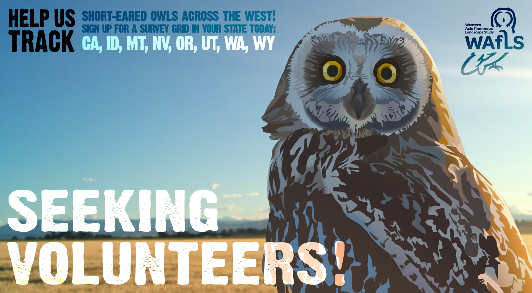 Community Scientists Needed for Short-eared Owl Surveys!