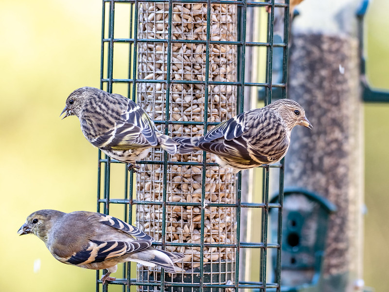 Safe Bird Feeding Alert